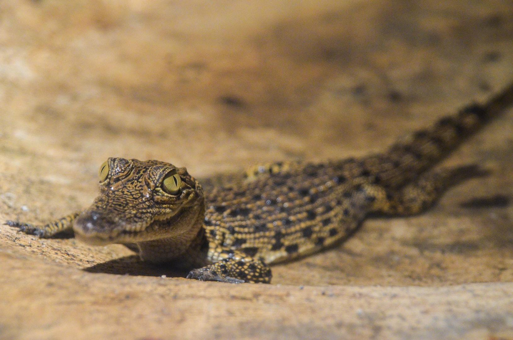 Photo de mon voyage aux Philippines - Zoo de Subic et Subic 6
