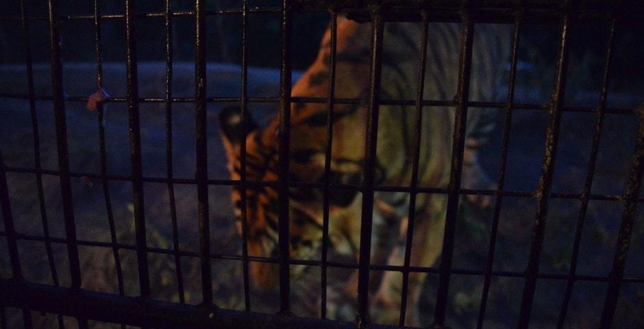 Photo de mon voyage aux Philippines - Zoo de Subic et Subic 9