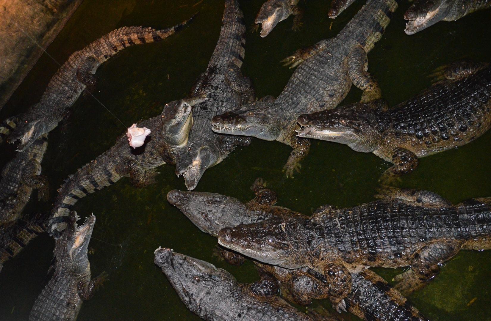 Photo de mon voyage aux Philippines - Zoo de Subic et Subic 11