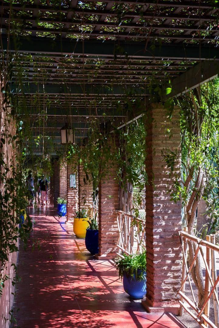 photo de cactus au jardin majorelle à Marrakech voyage au Maroc 5