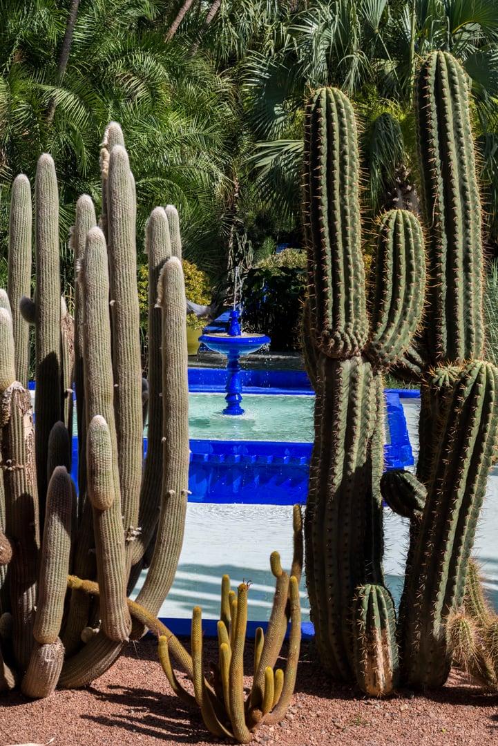 photo de cactus au jardin majorelle à Marrakech Maroc 4